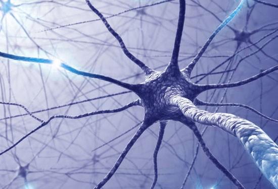 الأعصاب و كل ما تحتاج معرفته عنها في جسم الأنسان