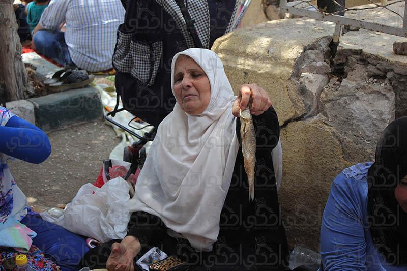 الفسيخ واللعب مع الحيوانات اهم مظاهر احتفال السيدات بعيد الربيع في الإسكندرية