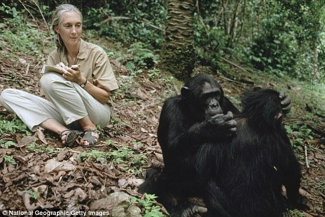 """""""جين"""".. سفيرة السلام التي قضت عمرها مع """"الشمبانزي"""""""