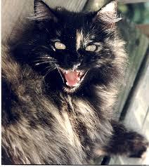 الخوف من القطط فوبيا و لا دلع بنات ؟