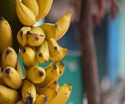 17 من فوائد الموز التي يضيفها لجسمك