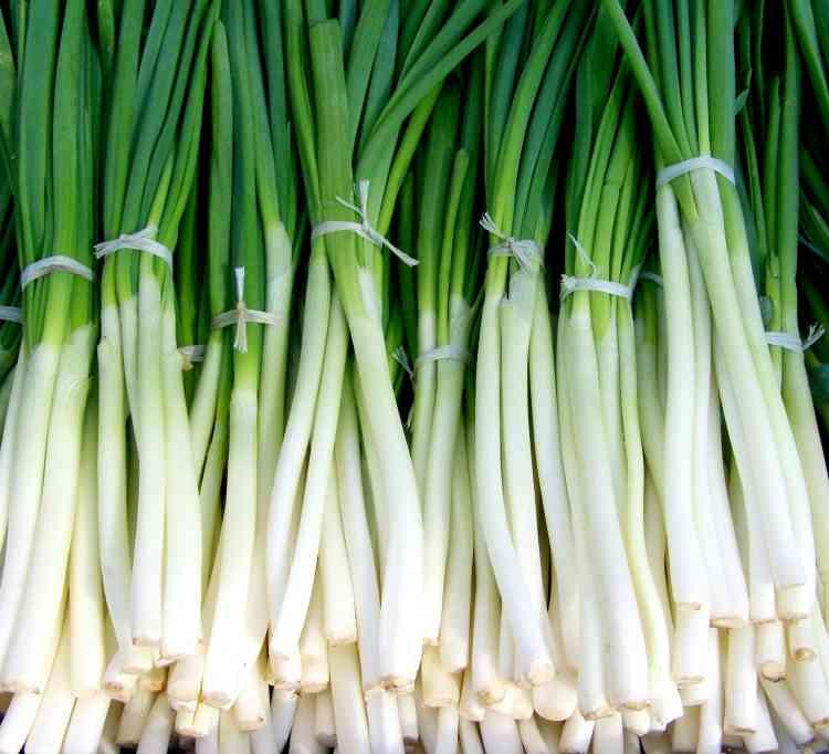 فوائد البصل الأخضر للصحة العامة ومقاومة البرد