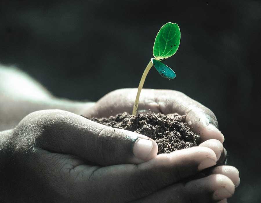 مشروع زراعة النباتات الطبية والعطرية في المنزل