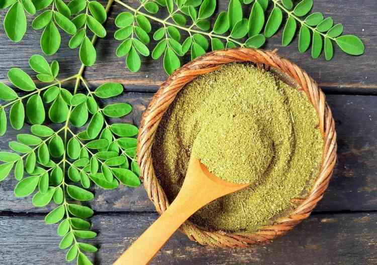 """""""النبات المعجزة"""".. تعرفوا على أهم فوائد المورينجا"""