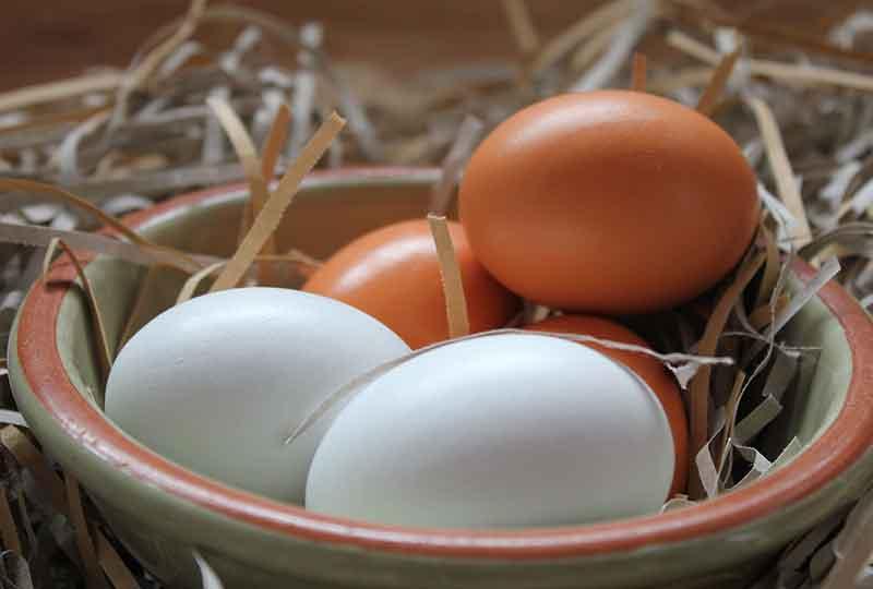 يحاوي البيض على الحديد اللازم للجسم