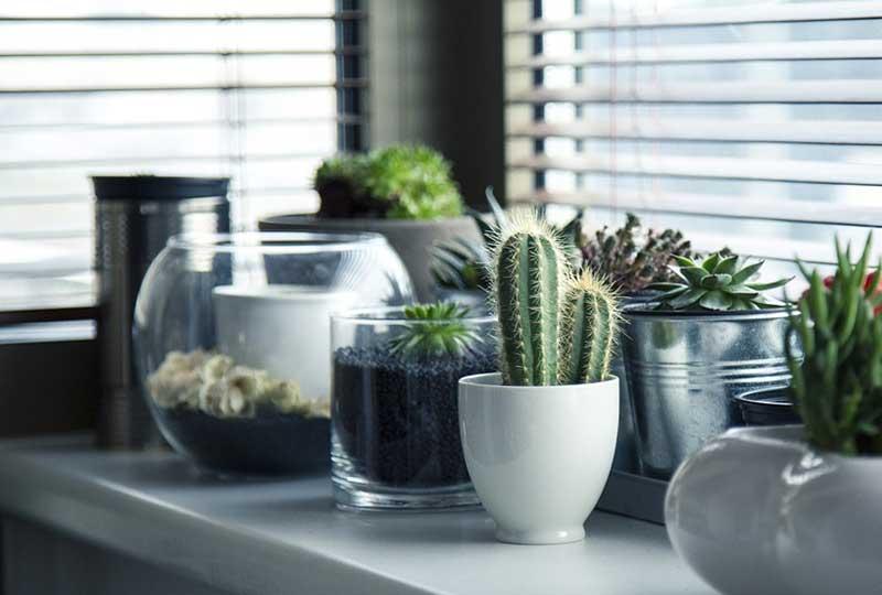 نباتات مناسبة للديكور