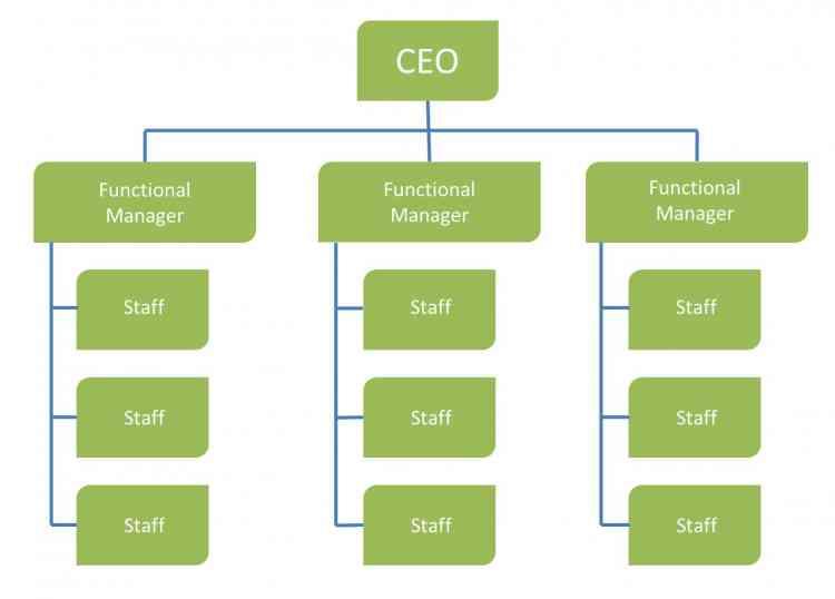 شكل الهيكل الوظيفي