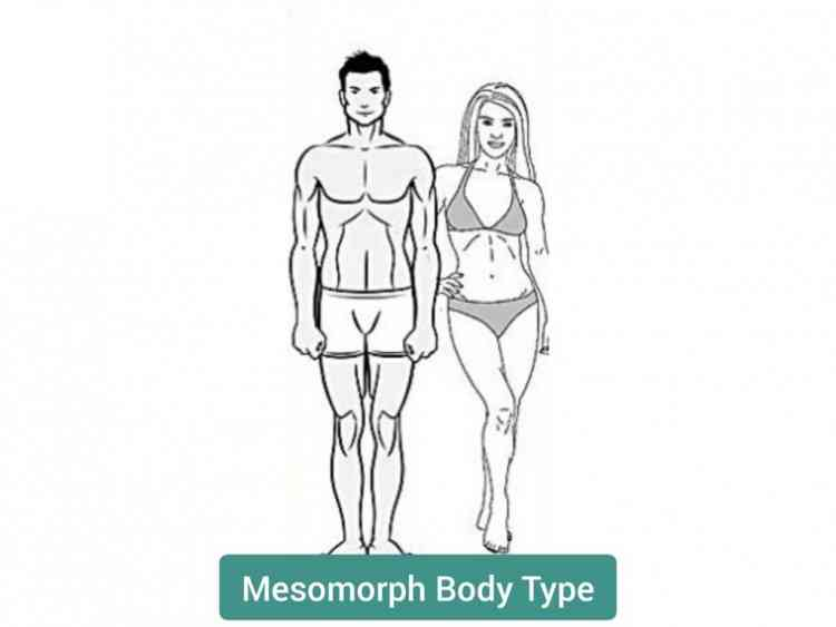 أنواع الأجسام نوع الجسم الميزمورف
