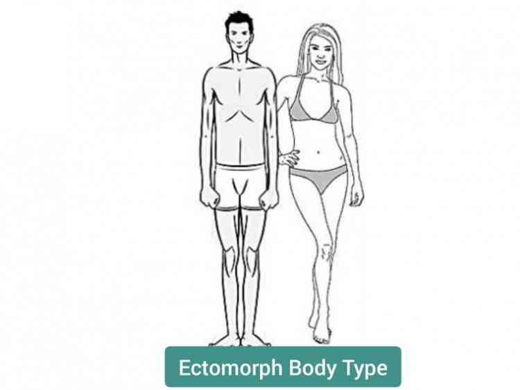أنواع الأجسام نوع الاكتومورف